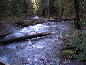 Elwha River Near Lilian Camp