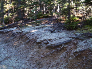 Frost on the trail to Hurricane Hill