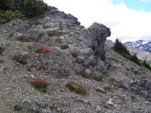 Obstruction Point Rock Garden