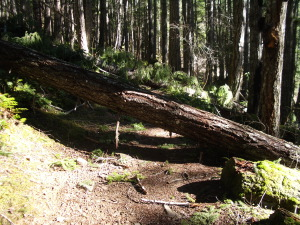 Log Across the Elwha Trail