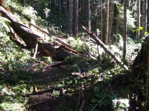More Logs and Brush on the Elwha Trail