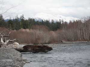 Hoh River from Five Mile Island